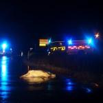 Trafikolycka med djur E22 Förkärla